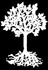 arbre-blanc